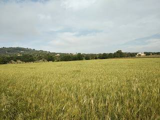 Manacor, baleares, Islas Baleares, Spain 07500, ,Plots,For sale,3938